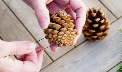 pine cone wire 2